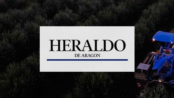 La oliva más temprana y nocturna de Aragón