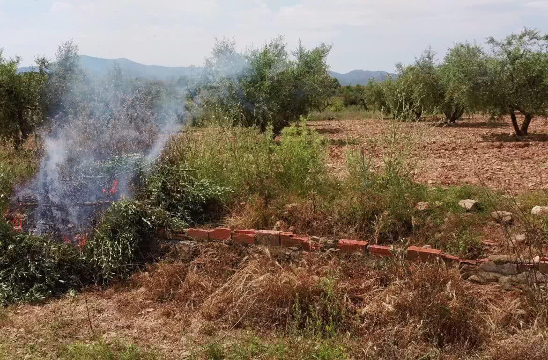 El fuego purifica el olivo